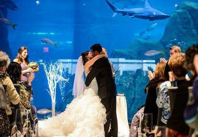 Aquarium Wedding bridal couple photo