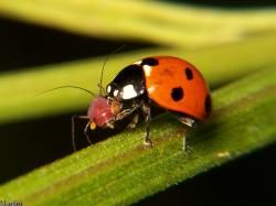 How to Attract or Release Beneficial Insects in Your Garden | UGA Center for Urban Agriculture