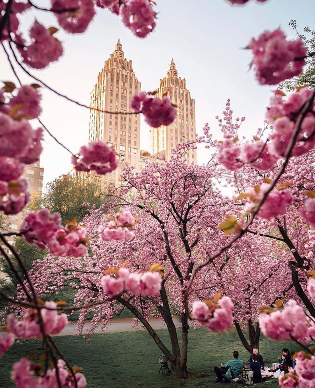 P L A N E T E A R T H On Instagram Cherry Blossoms Central Park New York Tag Someone You Would T Central Park Nyc New York Photos Beautiful Destinations