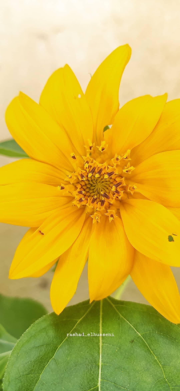 Pin By Rashad Elhusseni On Flower Flowers Plants