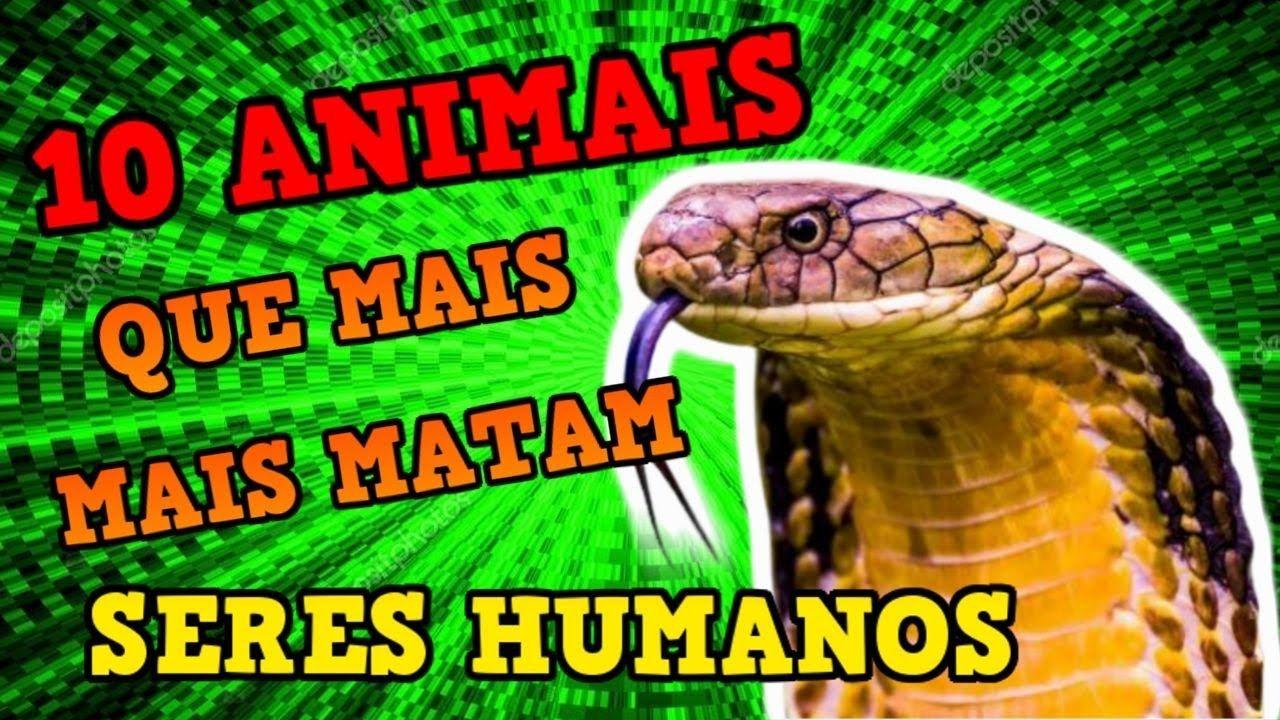 10 Animais Que Mais Matam Seres Humanos No Mundo Incrivel