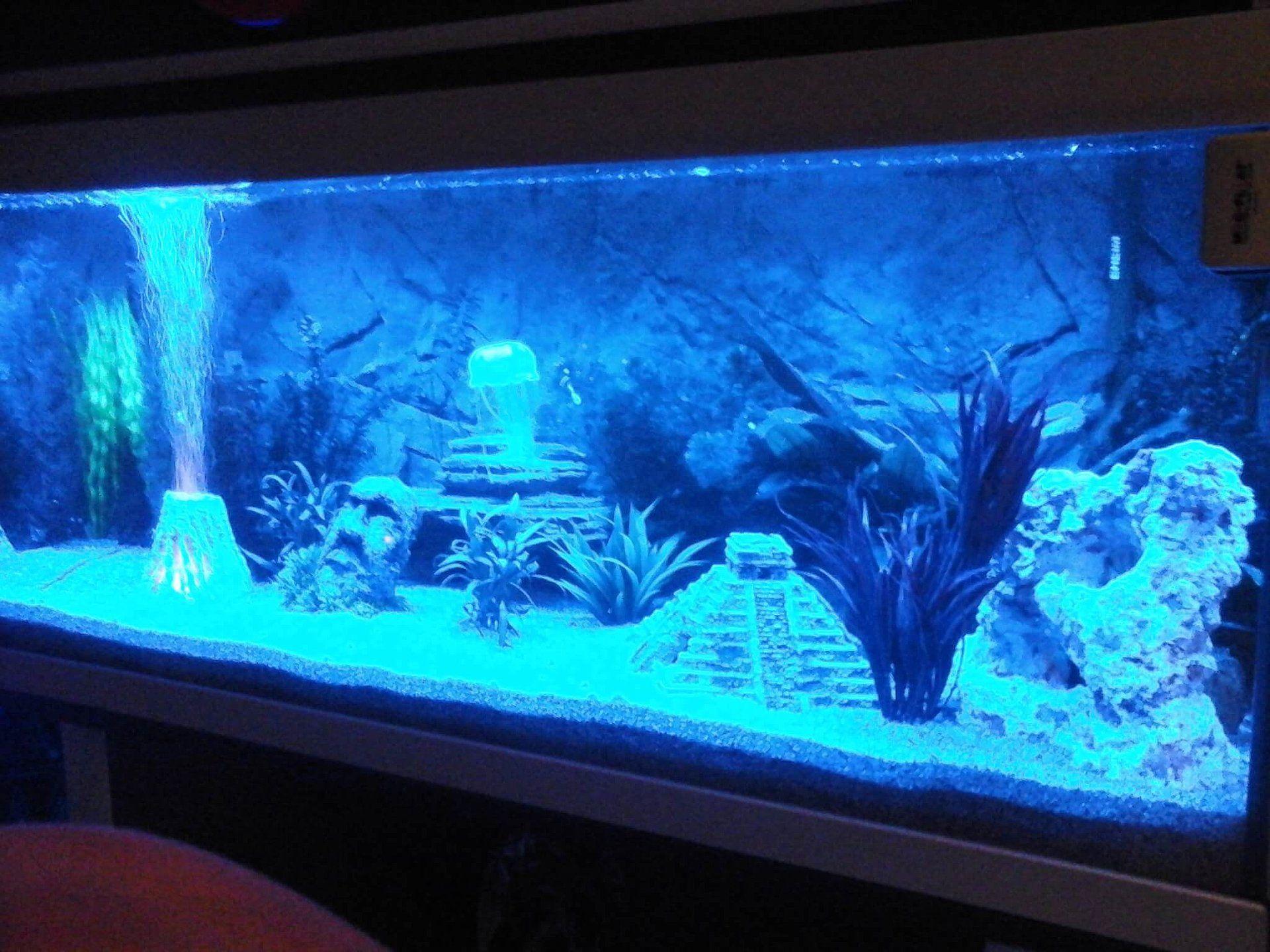 Aquarium led strip blauw | Aquarium verlichting | Pinterest ...