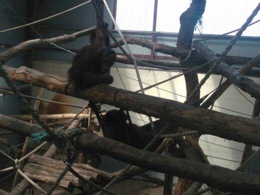 Zoo Arcachon - 16