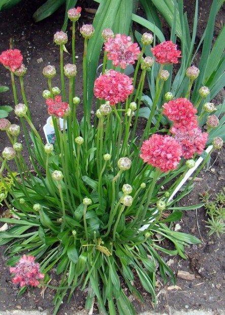 Garden Plans Zone 5 Shades 57+ Ideas #garden | Long ...