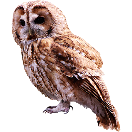 A Smallish Brown Old Is Seated An Looking At The Camera The Background Is Removed From This Png File For Your Ease Of Photoshopped Animals White Dogs Owl Png