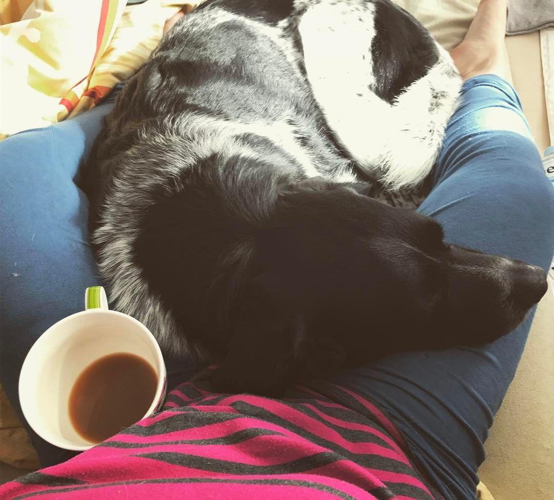 Mein kleiner Schoßhund. Ich glaube manchmal wäre er gern 25 Kilo leichter und viel kleiner. Vor allem in letzter Zeit möchte Moe so oft in mich hinein kriechen - das Alter macht ihn seeeehr liebesbedürftig.