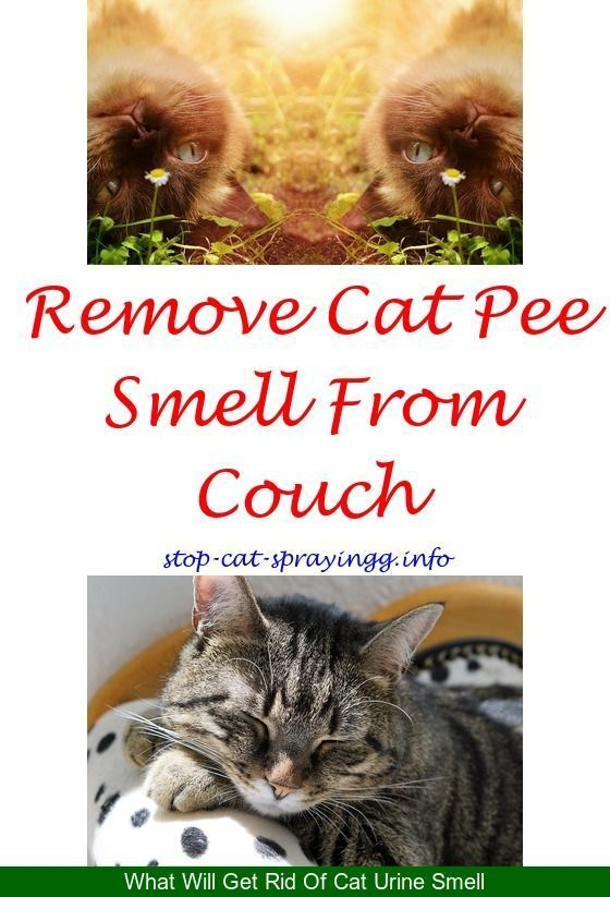 Exceptionnel Cat Spraying On Furniture Cat Urine Out Of Carpet Living Rooms   Cat Urine  Stains On Carpet.pet Spray For Furniture Cat Urine Out Of Cu2026