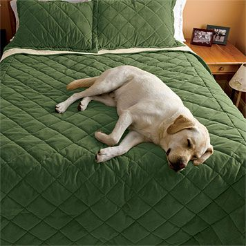 Microfiber DogProof Coverlet - Best Dog-proof bedding Ever ...