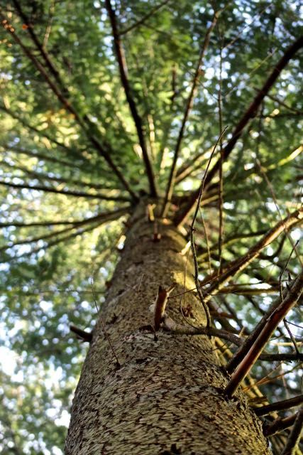 Naturkompagniet er også et savværk, hvor tømmer fra Brahetrolleborg skoven…