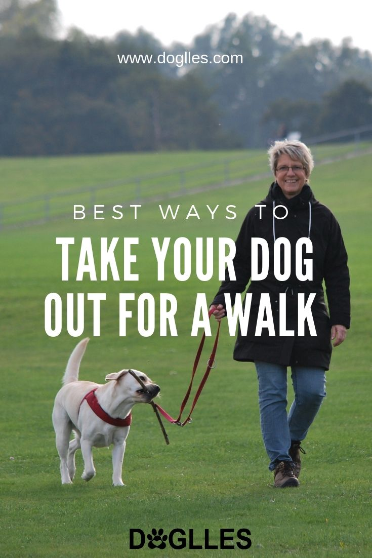 Best ways to take your dog out for awalk dog walking