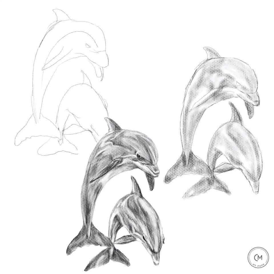 Photo of How to draw dolphins, animal drawing, art education, tutorial, art studio, tattoo, pencil, digital