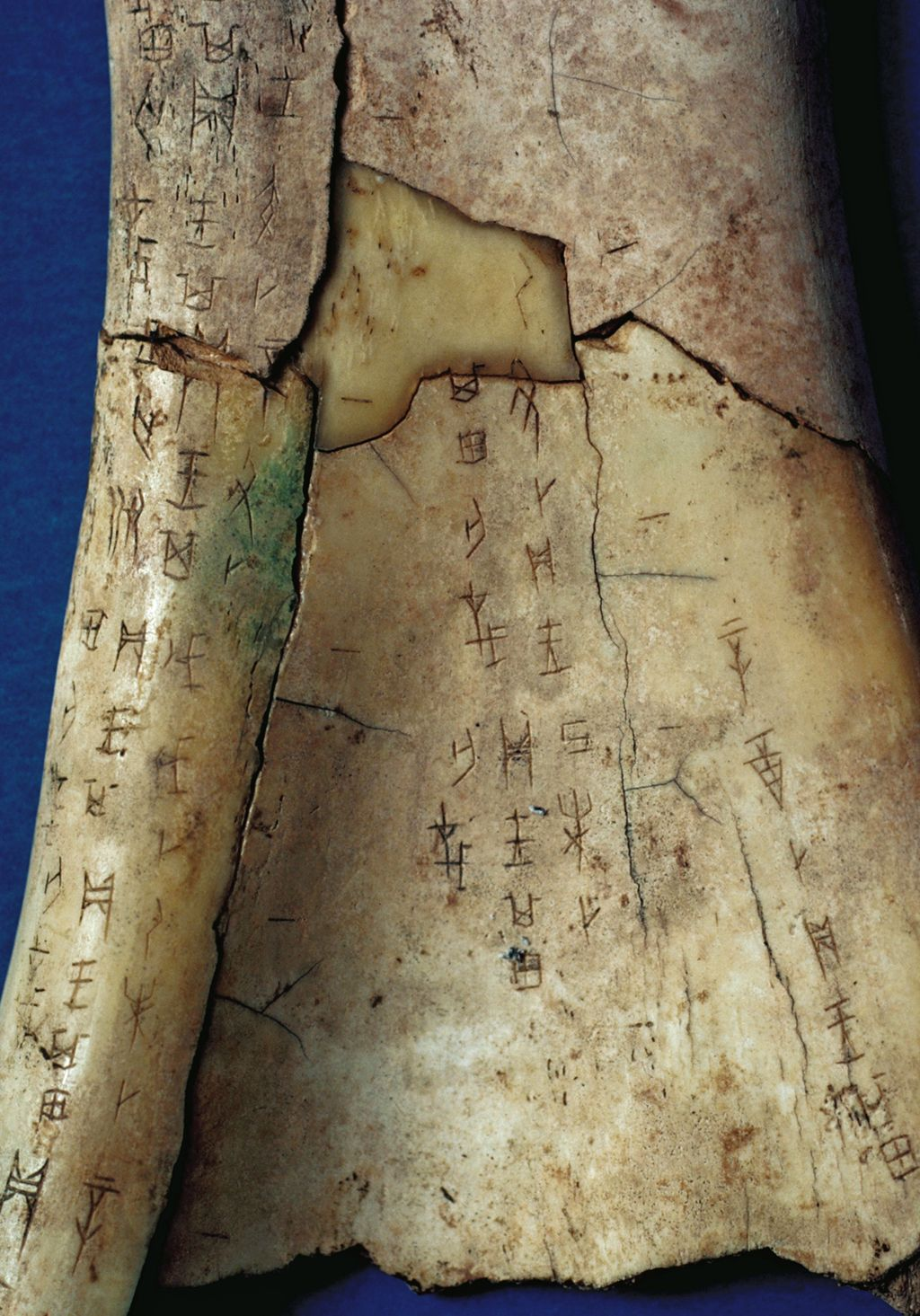 """The Shang used oracle bones to """"tell the future."""" They wrote on the"""