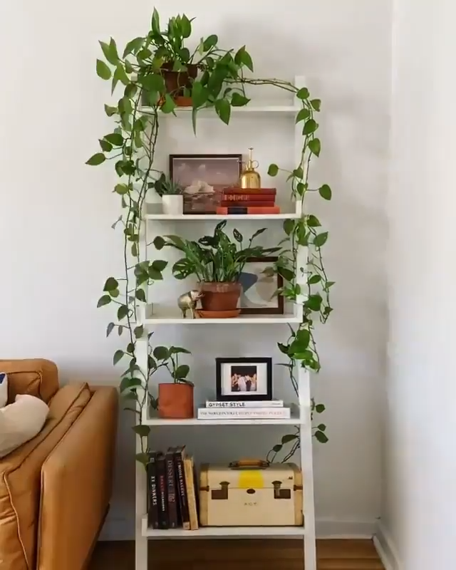 Photo of Plant-filled shelf decoration –  @thejungleupstairs is a plant guru, we are in l…