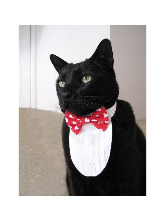 687a8b661b35af6b22ba1e4aefecc587 - How To Get My Cat To Wear A Collar