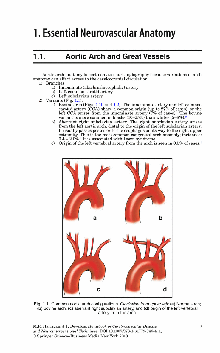 Enchanting Aortic Arch Anatomy Inspiration - Anatomy and Physiology ...