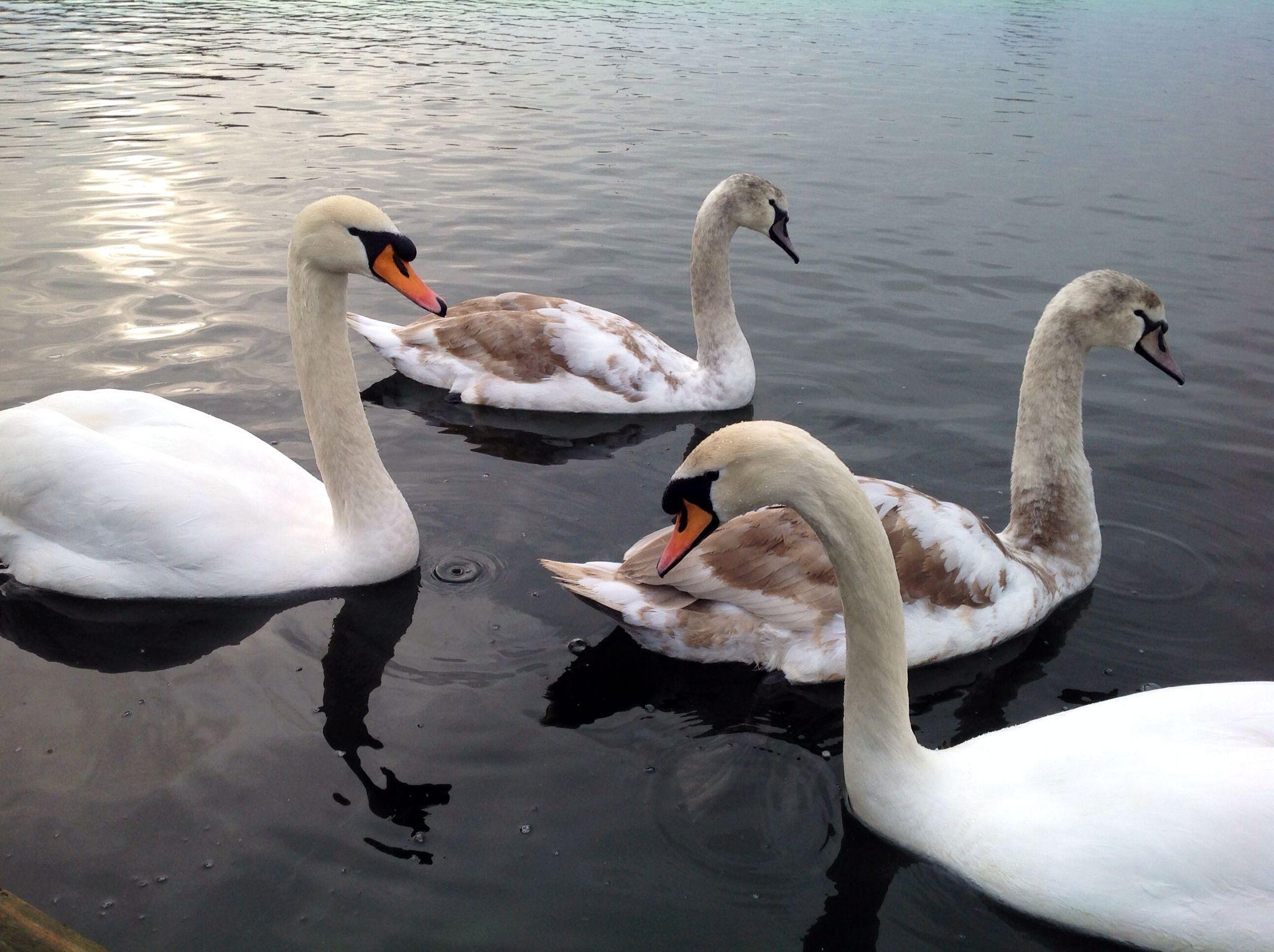 Norfolk Wildlife Birds, Wildlife, Animals