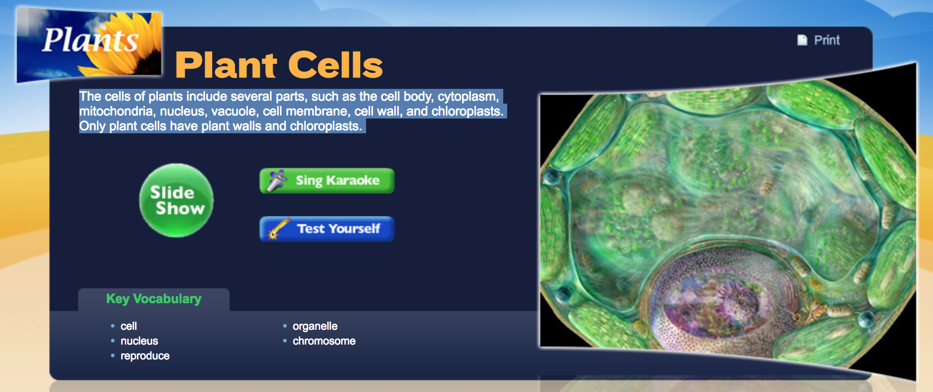 A Free Slide Show And Quiz On Plant Cells  Appropriate For