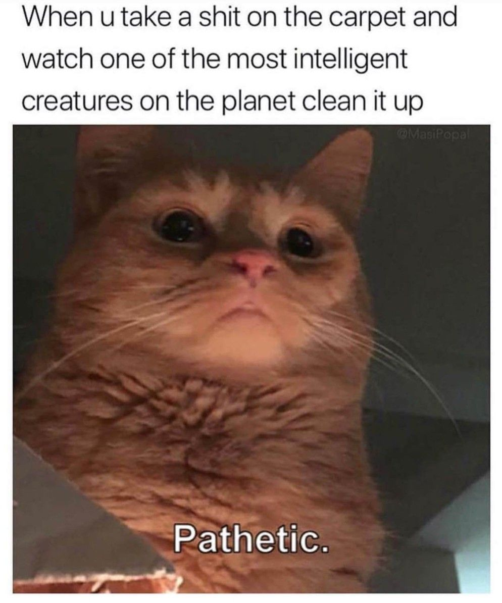 48 Rofl Memes That Are Just Outstanding Memes De Gatos