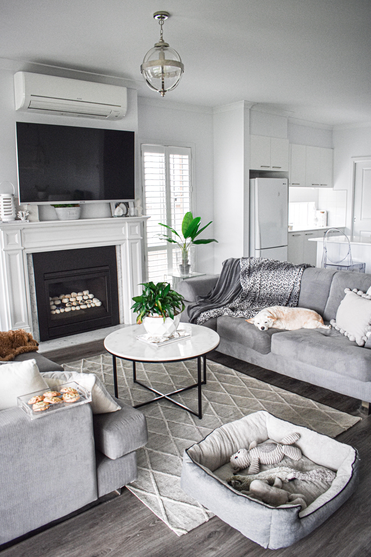 Dogs Labradoodle Puppy Fireplace Ideas Fireplace Tv