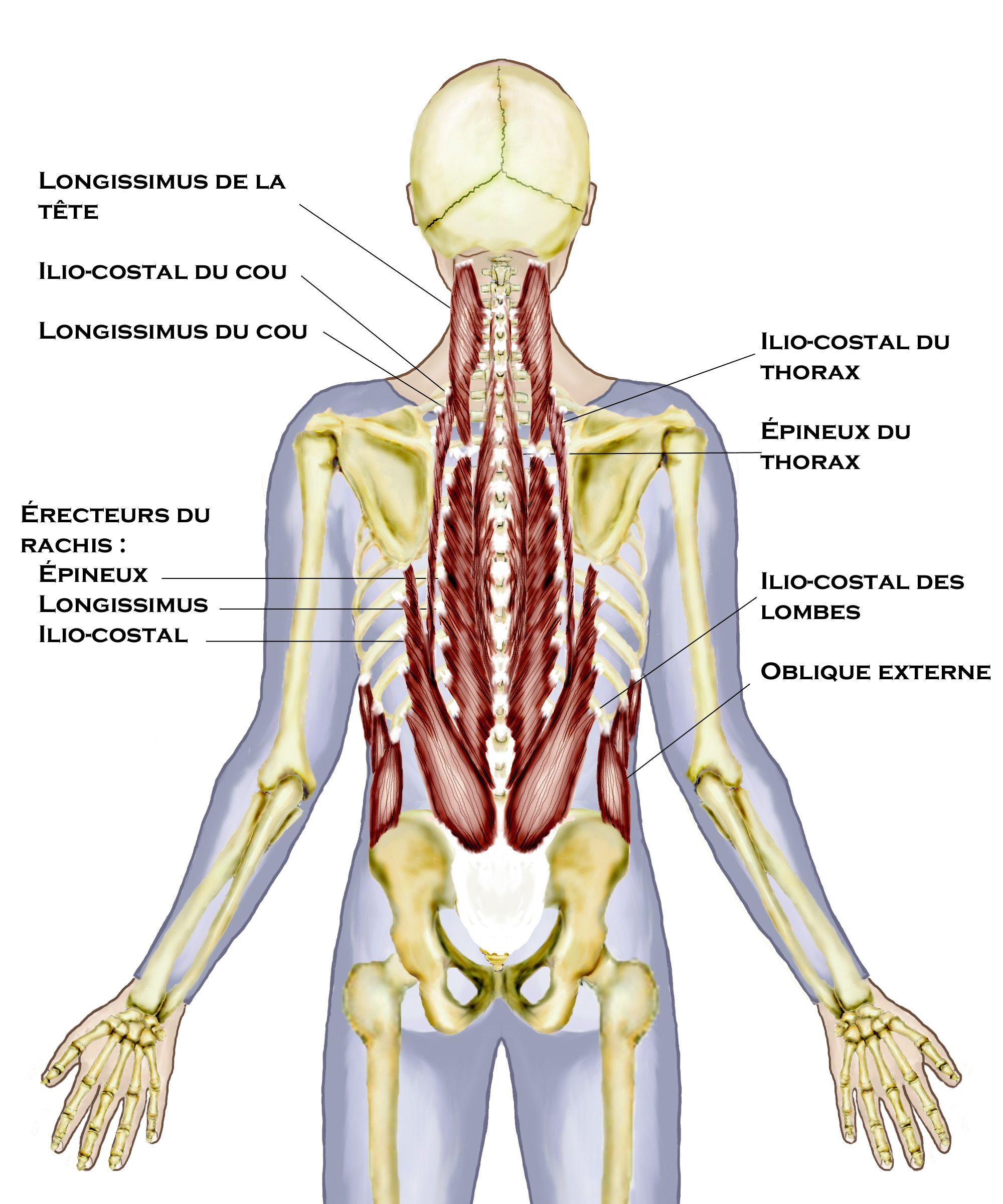Wunderbar Learnsmart Labor Anatomie Und Physiologie Bilder ...