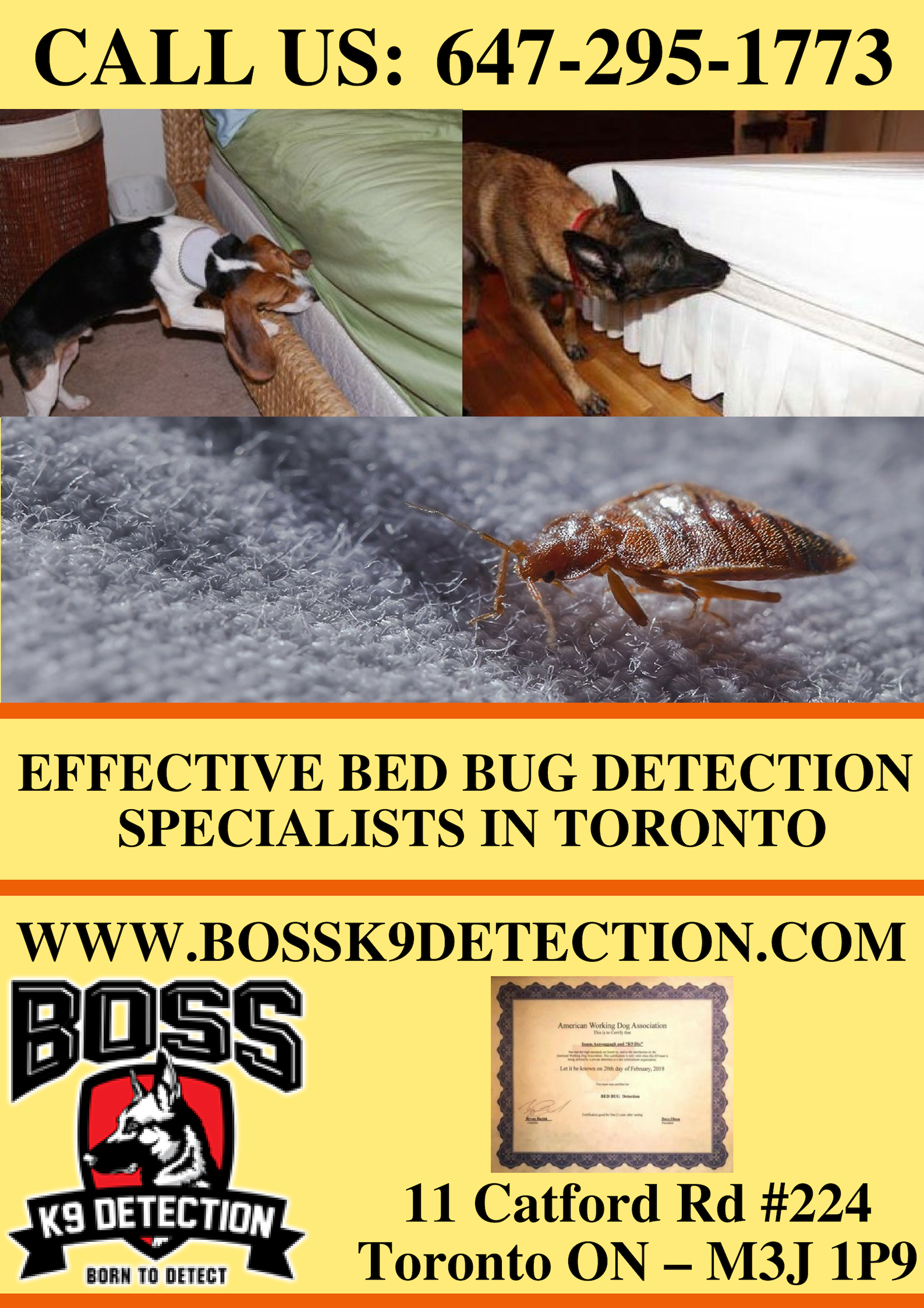 Looking for Effective Bed Bug Detection Specialists in