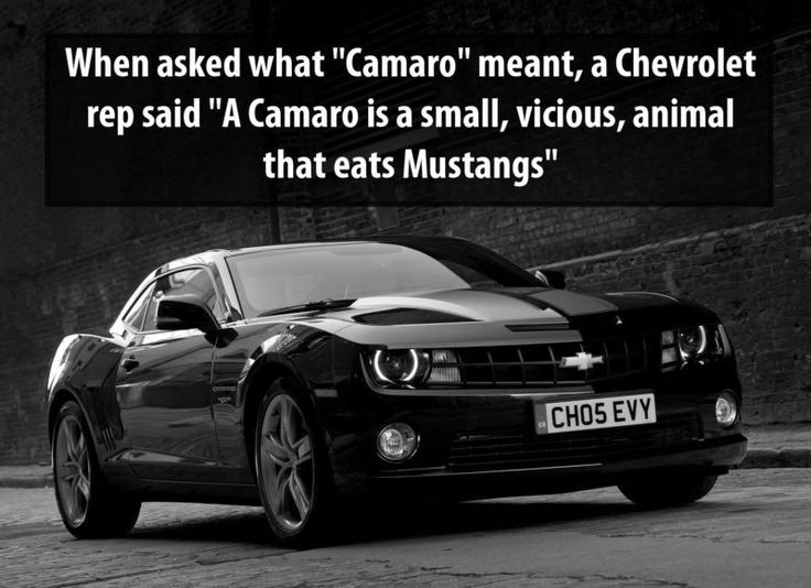 A Camaro Is Small Vicious Animal That Eats Mustangs 32 Cool Car Facts You Didn T Know Click To View The Video Spon