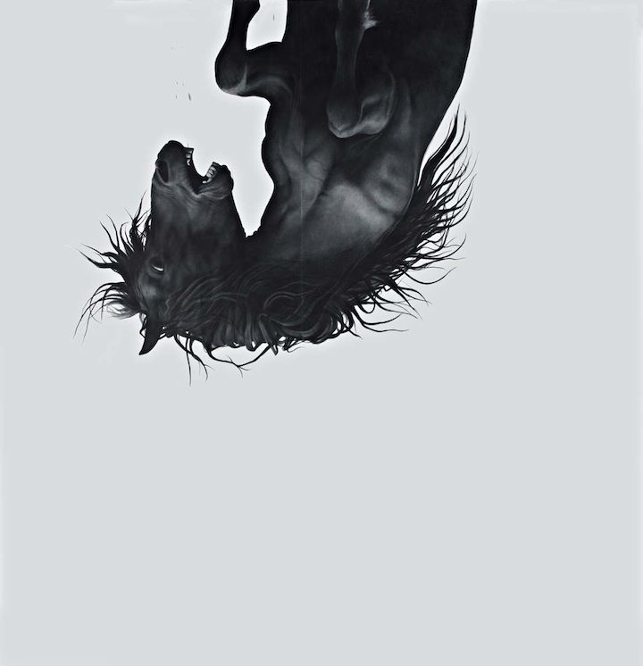 Falling Horses by Larassa Kabel   O.o   Pinterest   Skeletons, Lions ...