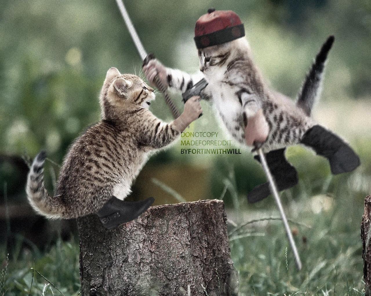 Crouching Kitten Hidden Dragon Funny Cat Wallpaper