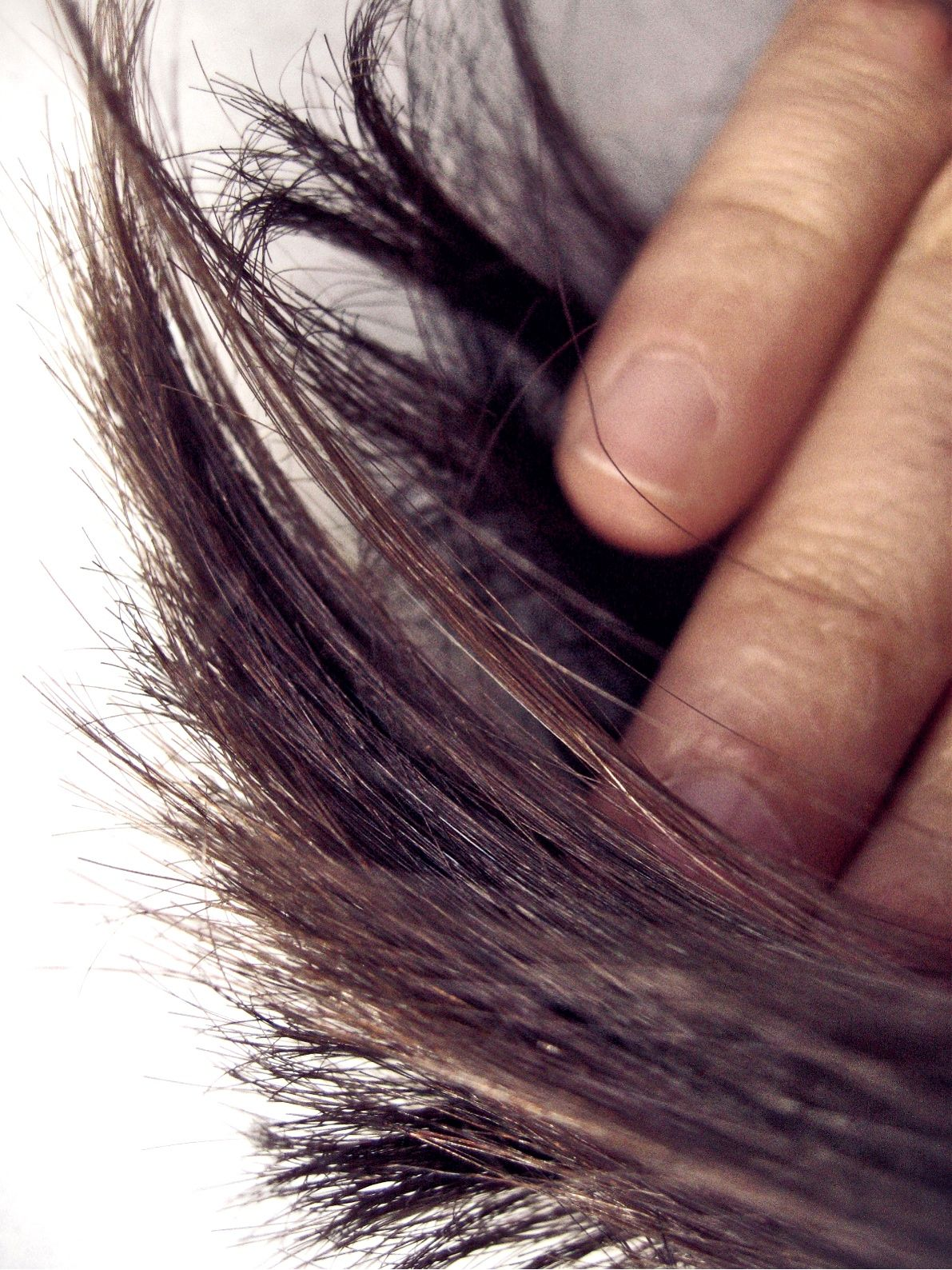 How To Get Rid Of Split Ends   Split ends, Hair care tips ...