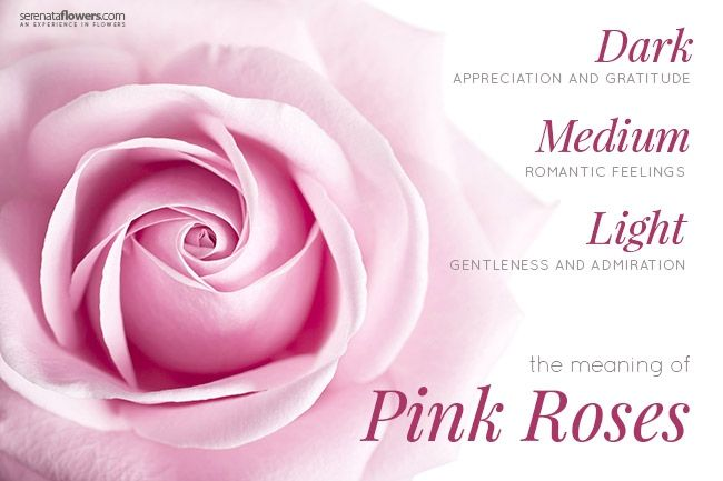 Image result for pink rose meaning cake designs pinterest pink image result for pink rose meaning pink roses rose meaning romantic flowers floral mightylinksfo