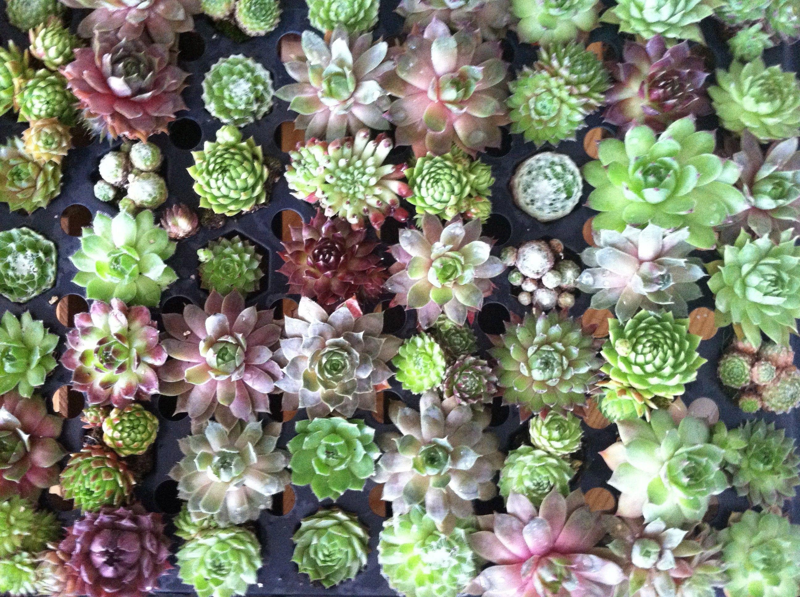 Succulent wallpaper Мятный фон, Суккуленты, Бирюзовый фон