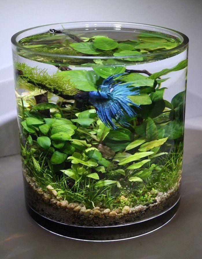 Plante aquatique jetez vous l 39 eau en 47 photos for Petit bocal en verre pas cher