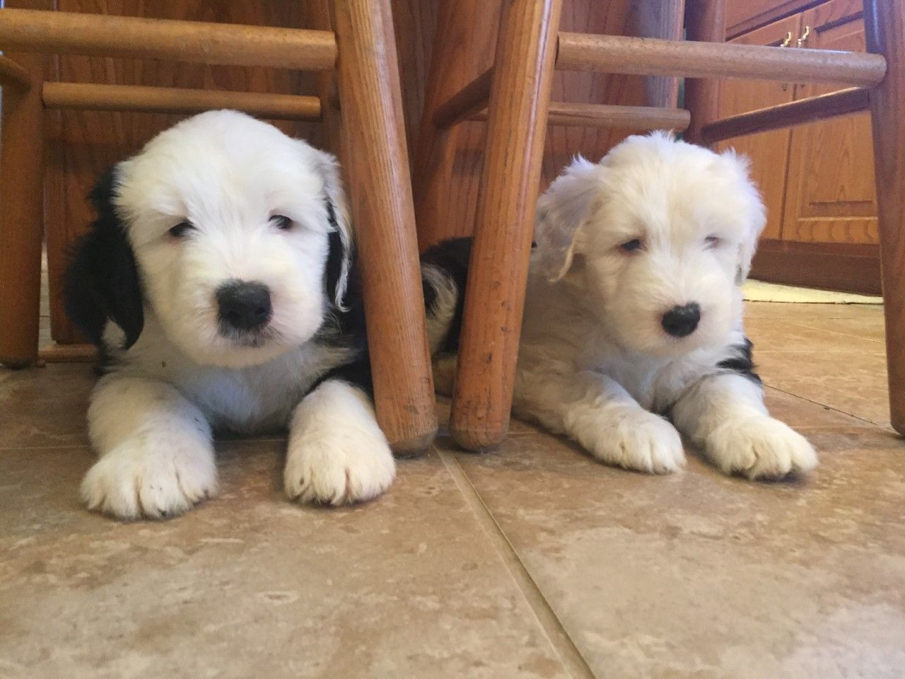 Pin by Cynthia Snapp on Puppy Love English sheepdog, Old