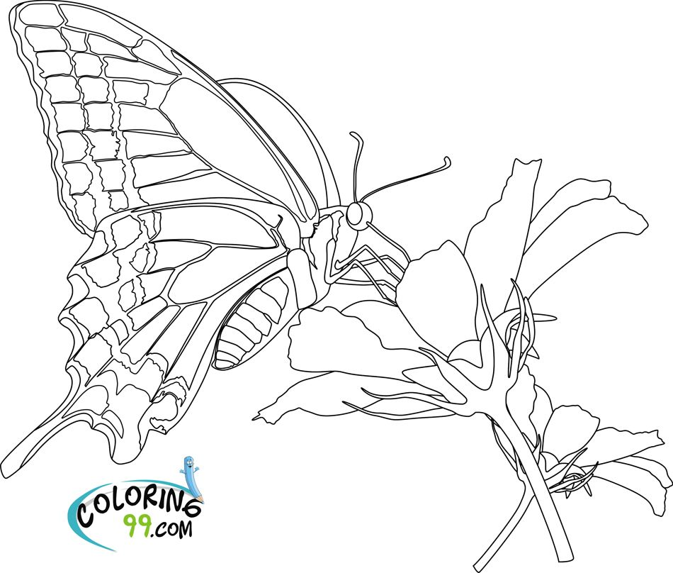 Coloring Pictures of Flowers and Butterflies Bing images