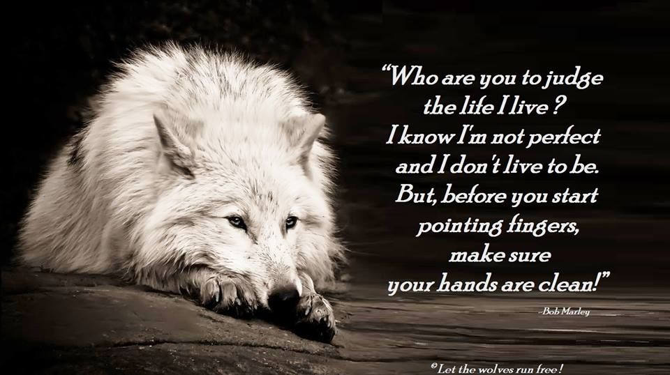Photo Of Wolf Poems For Fans Of Wolves Wolf Peoms Of Spirit And