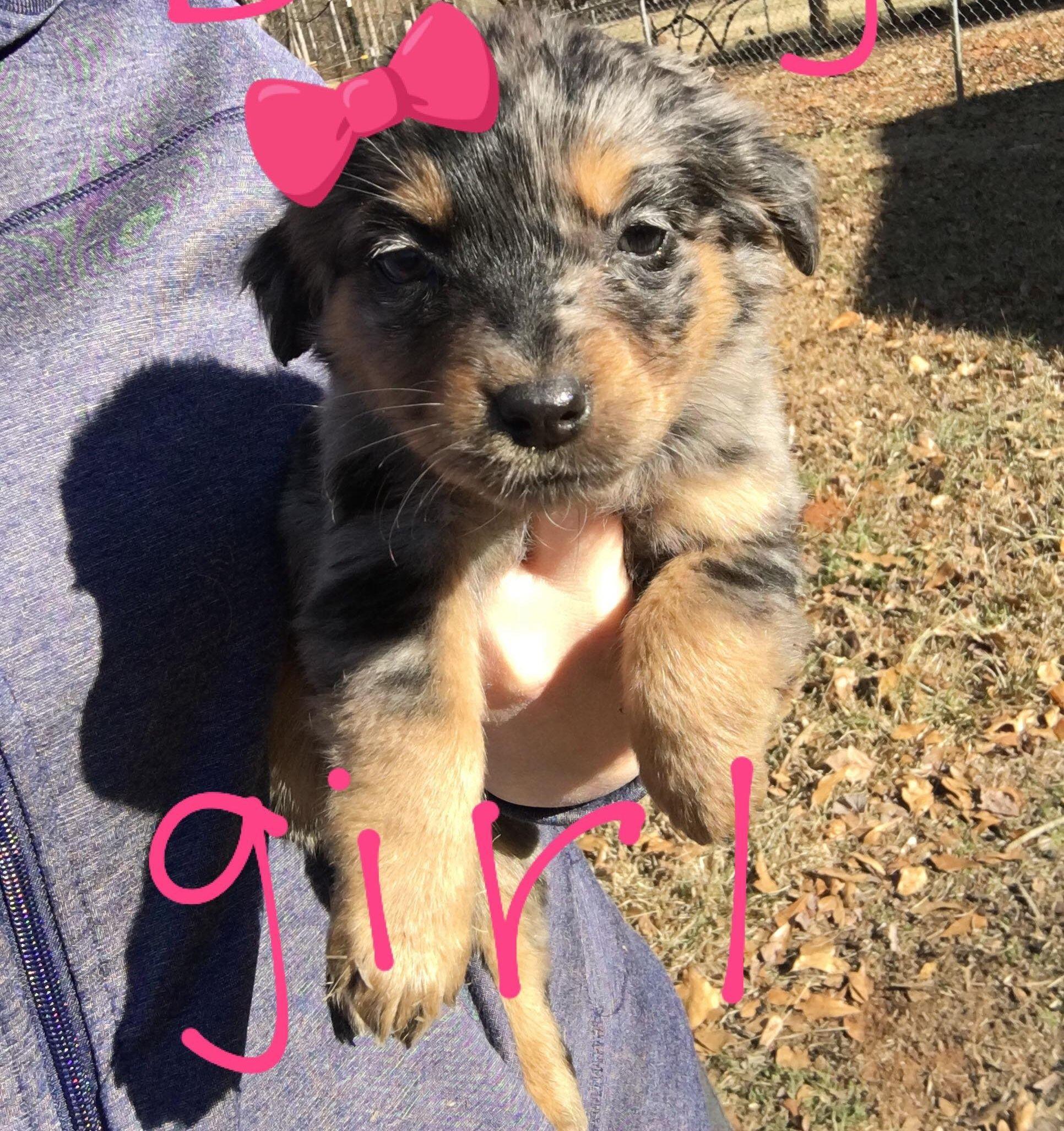 Adopt Sukie On Pets Dogs Shepherd Mix Dog