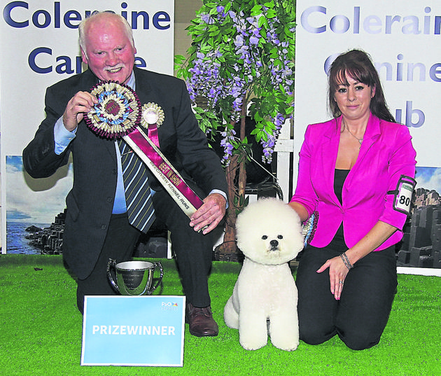 Coleraine Cc Beau Takes The Plaudits At New Show Reports By Joyce Crawford Manton Photos By Irish Canine Press New Shows Canine Dogs Of The World