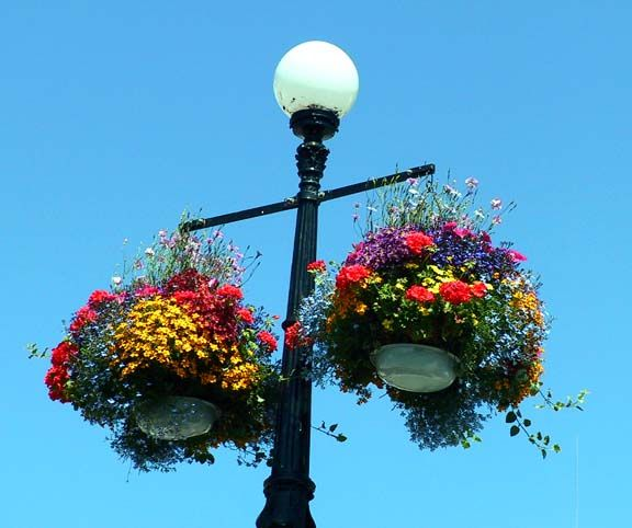 Victoria Canada S Hanging Baskets It Was Beautiful There