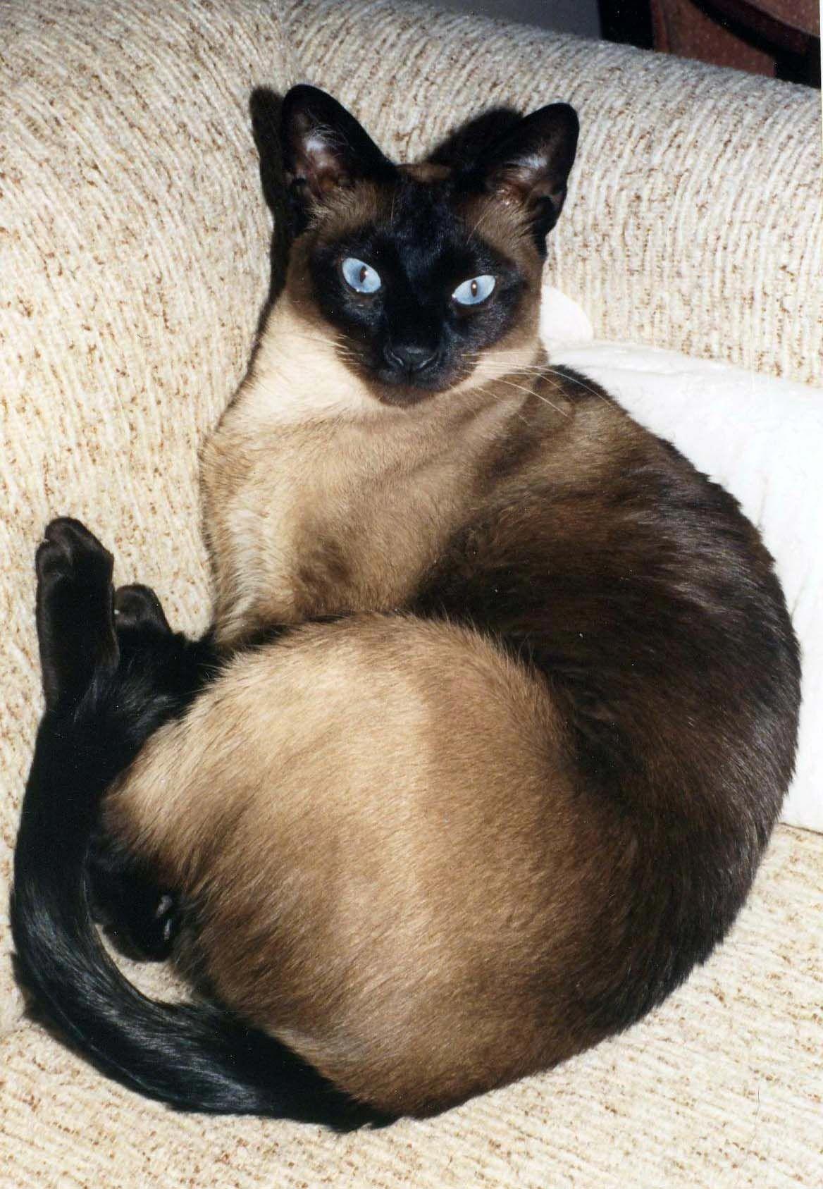 Such A Beautiful Boy Angoracats Angora Cats Cats Kittens
