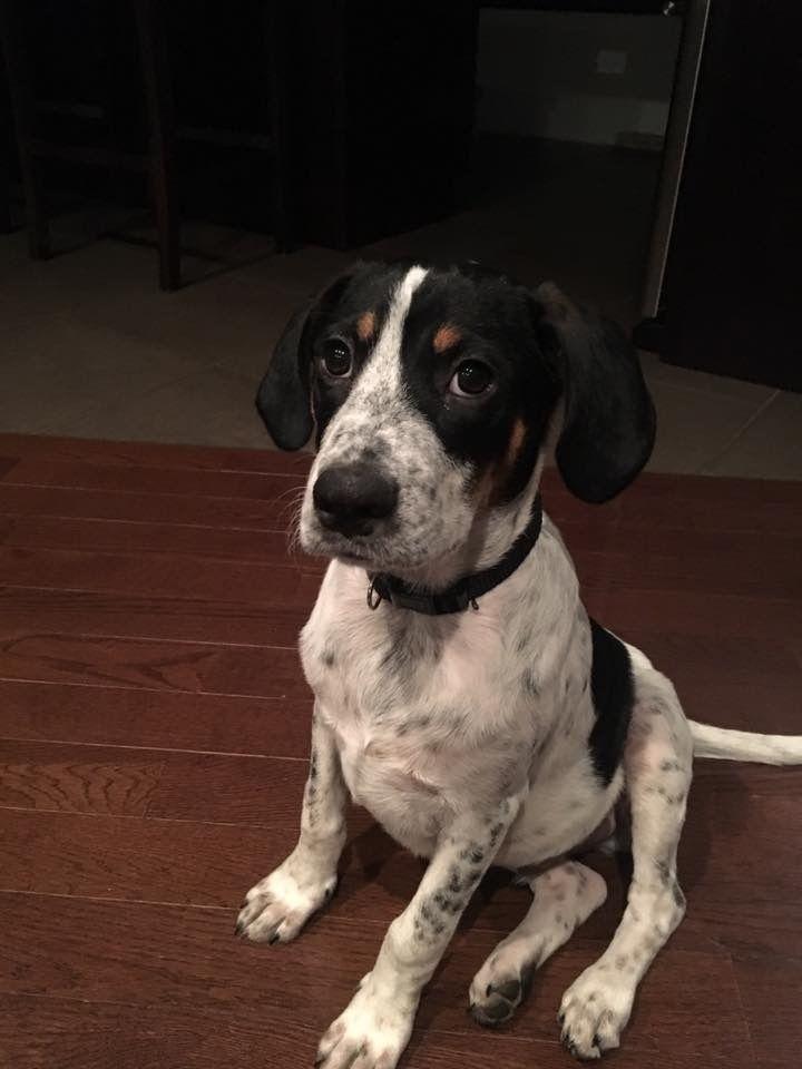 Adopt Artie On Rottweiler Mix Adoption Pets