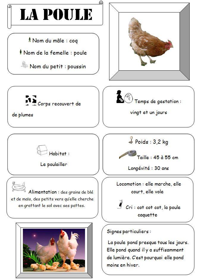 Cri De La Poule : poule, Carte, D'identité, Poule, Mathilde, Cliquezicisurfez.over-blog.com, D'identité,, Poule,