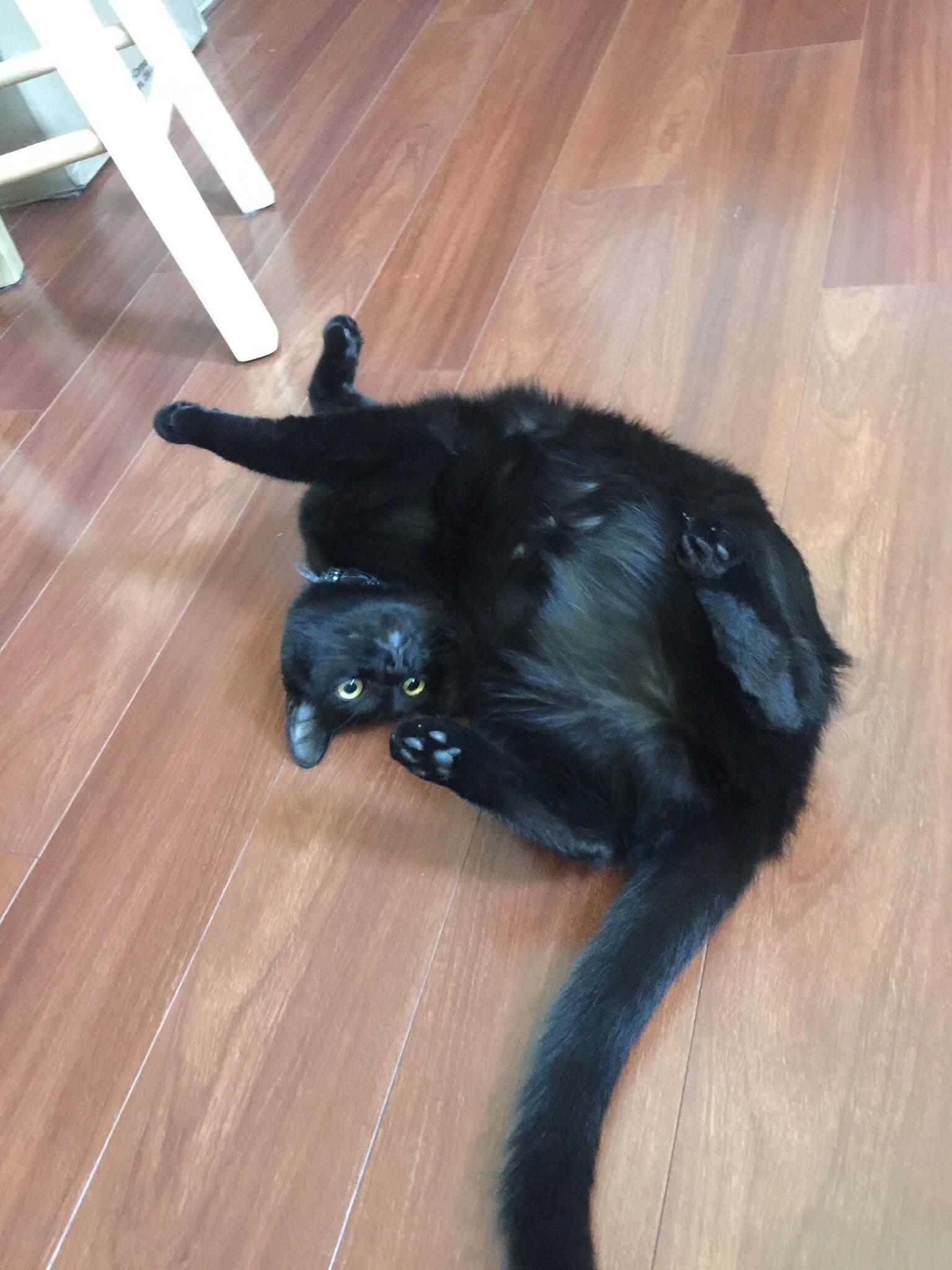 My Kitty Luna Was Flopping Around On The Floor Kitty Animals Flop
