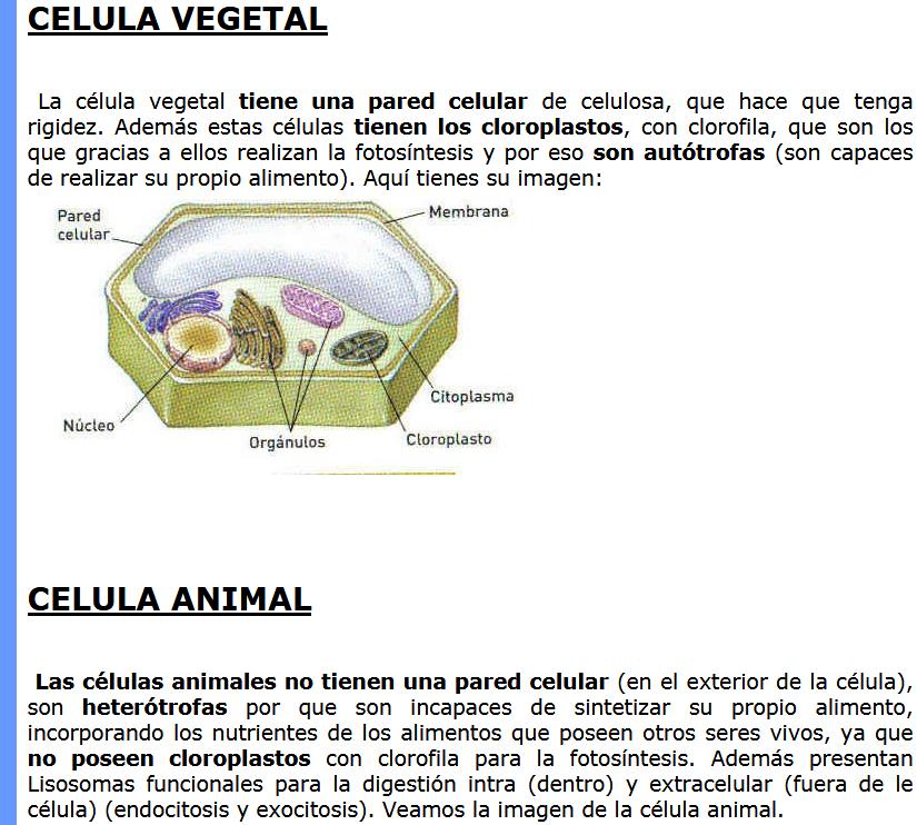 Celula Animal y Vegetal Definición, partes, imagenes | Educacion ...