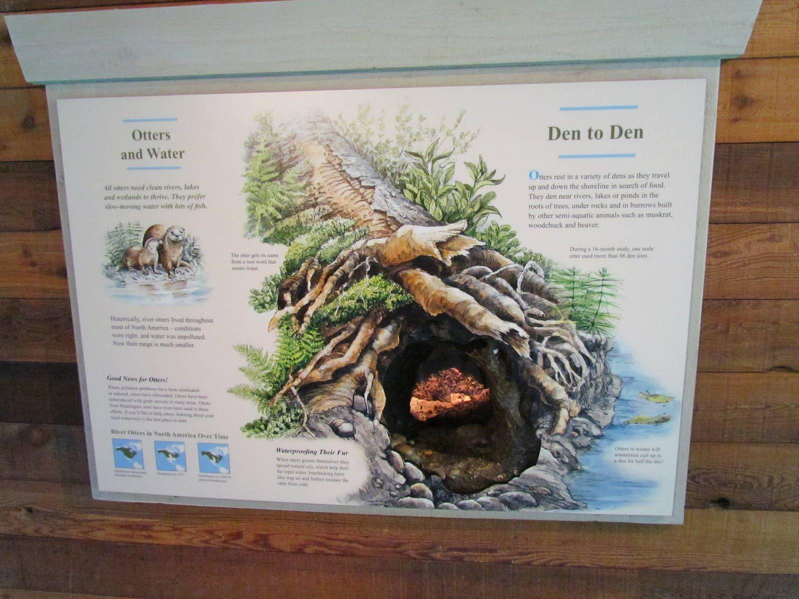 Northern Trail River Otter Den Woodland Park Zoo Gallery River Otter Otters Woodland Park Zoo