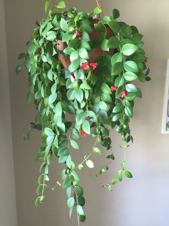 Hanging plants to bring nature into your home #hangingplantsindoor