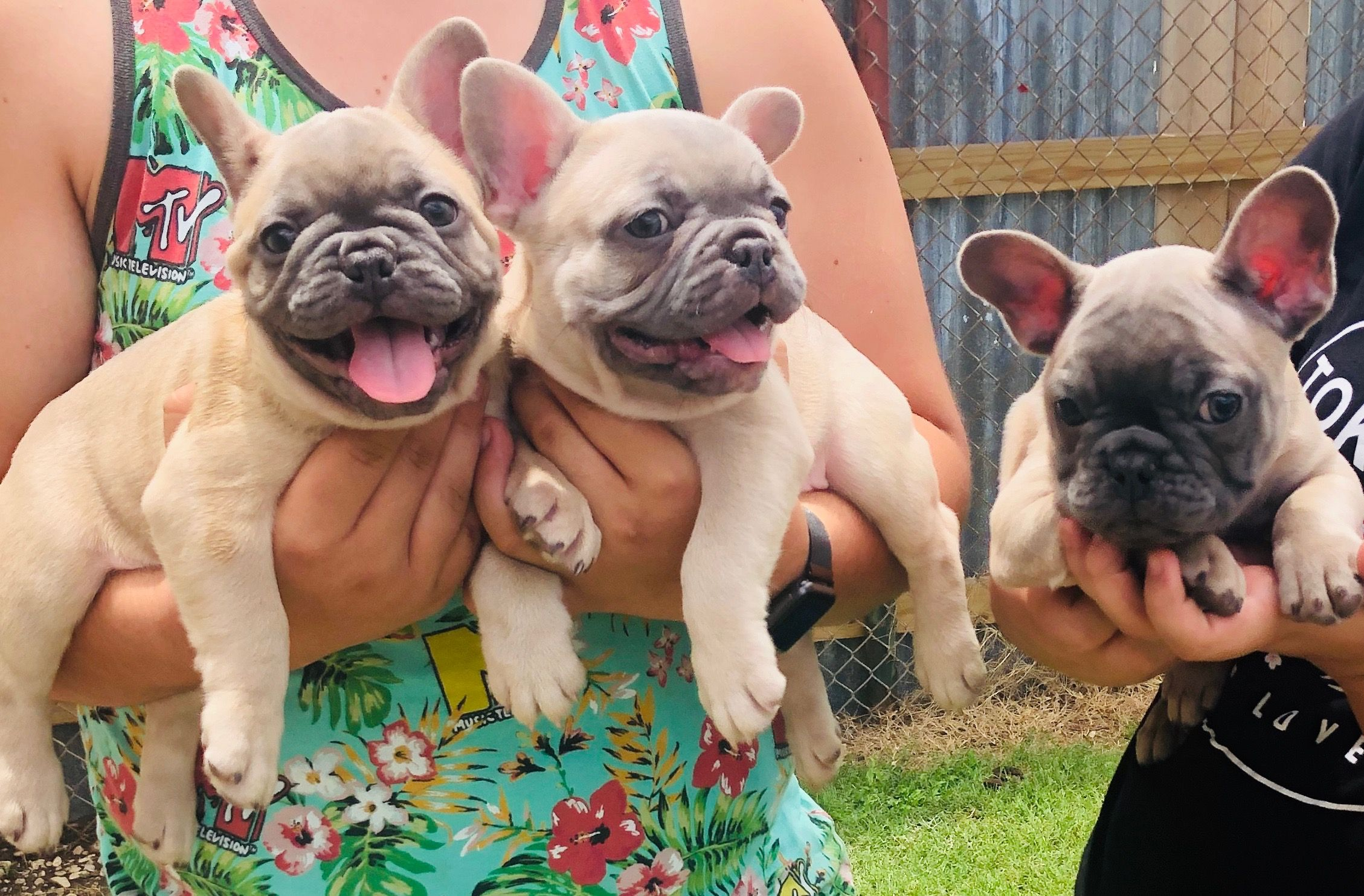 Pin on cute puppys