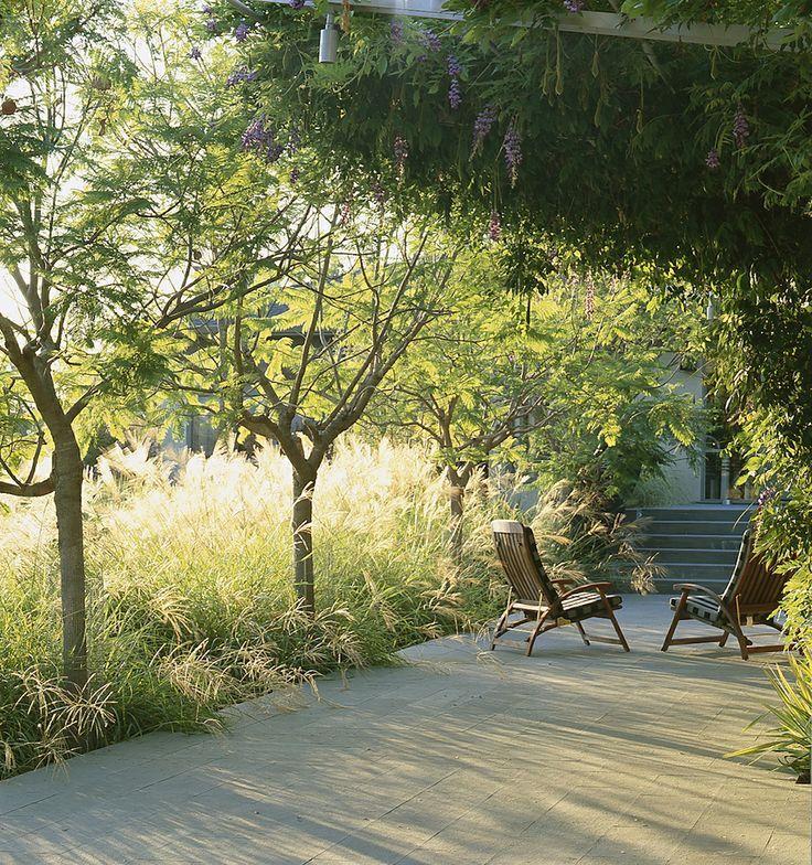 Small Ornamental Trees For Kansas: #Home #Outdoor #Landscape Via