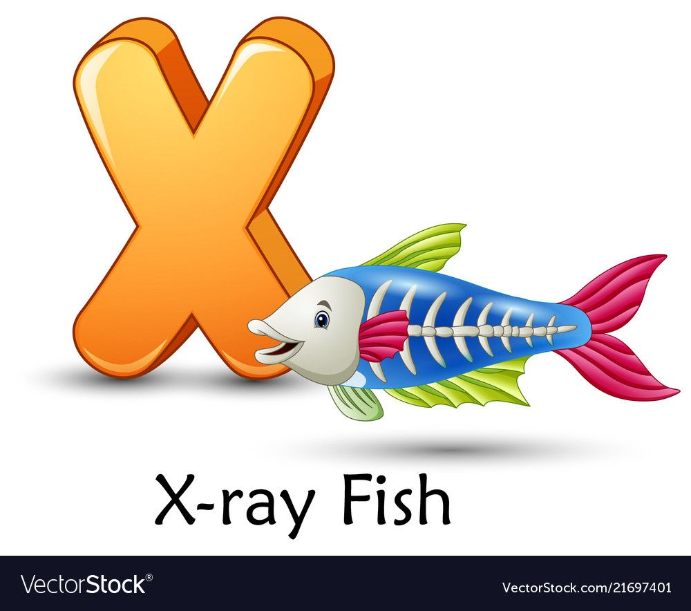 Letter X Is For X Ray Fish Cartoon Alphabet Vector Image On