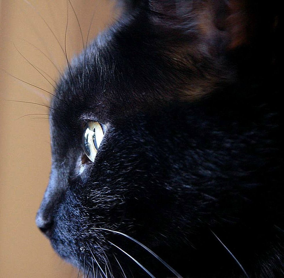 100 Unique Witch Names for Cats From History and