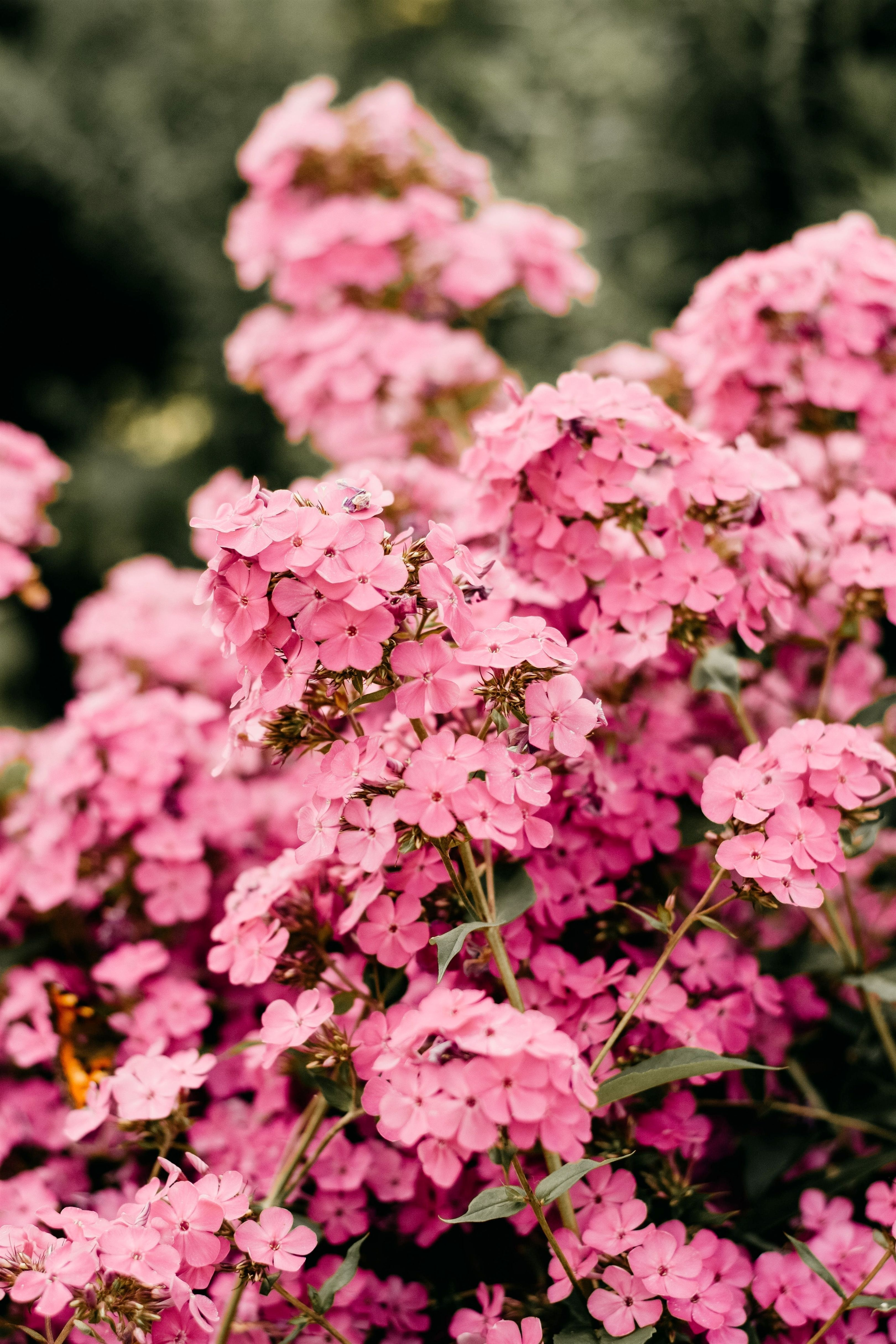 gardening tape_779_20200411103226_53 gardening australia